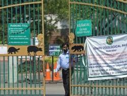 Энэтхэгийн амьтны хүрээлэнд COVID-19 халдвар тархжээ
